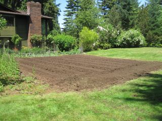 Rototilled garden area next to lawn
